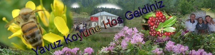Yavuz Köyü Web Sayfası